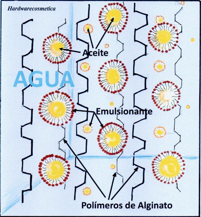 alginato005