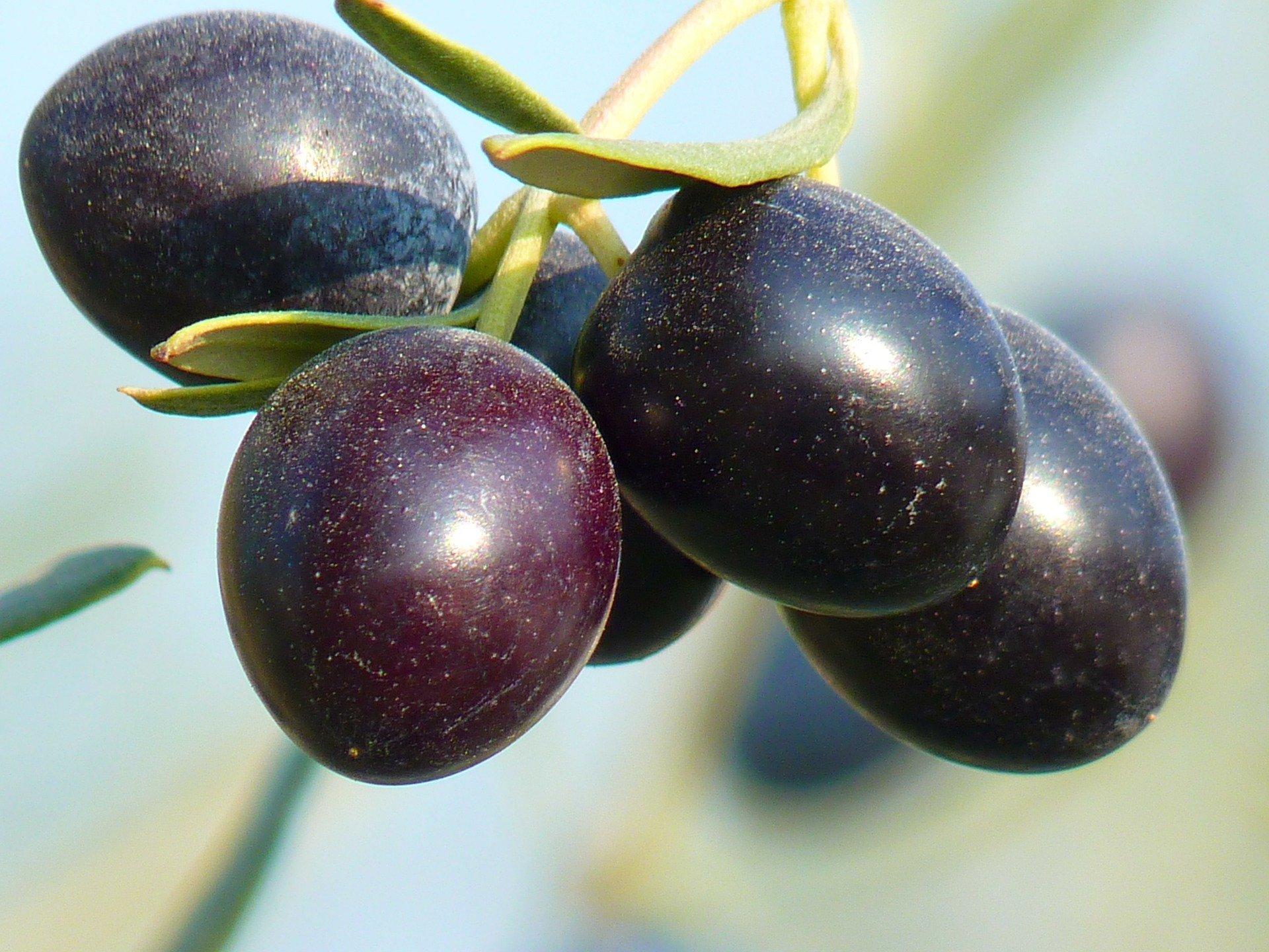 olives-15016_1920